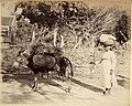 Collectie Nationaal Museum van Wereldculturen TM-60062277 Vrouw met ezel op een landweg Jamaica J. Valentine & Sons (Fotostudio).jpg
