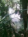Colo-i-Suva Stream.jpg