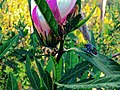 Cool Flower Pic.jpg