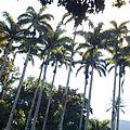 Coqueiros - Jardim Botânico 2.jpg