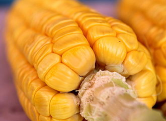 Corncob - Closeup of an ear of corn, with the kernels still attached to the cob