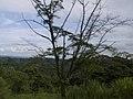 Costa Rica (6090306507).jpg