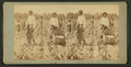Cotton pickers, Georgia, from Robert N. Dennis collection of stereoscopic views.png