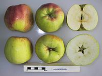 Cross section of Byeloborodovka, National Fruit Collection (acc. 2000-023).jpg