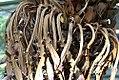 Cycas circinalis 1zz.jpg