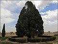 Cypress of Abarkuh سرو ابرکوه - panoramio.jpg