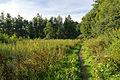 Dörentrup - 2015-08-05 - LIP-036 Begatal (30).jpg