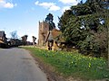 Daffs in Priors Hardwick - geograph.org.uk - 148206.jpg