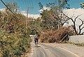 Damage by Hurricane Gilbert Reading Jamaica 1988.jpg