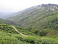 Darjeeling tea plantation (7353921512).jpg