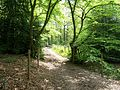 David Brough Cycle Trail, Bayhurst Wood.JPG