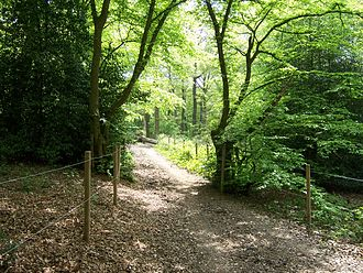 Ruislip Woods - The David Brough cycle trail through Bayhurst Wood