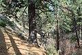 Davis Creek Park - panoramio (32).jpg