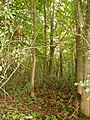 Deadman's Wood - geograph.org.uk - 265262.jpg