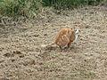 Defecate cat in grass.jpg