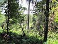 Degradação Florestal Amazônia 26.jpg