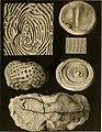Denkschriften der Kaiserlichen Akademie der Wissenschaften - Mathematisch-Naturwissenschaftliche Classe (1854) (20851039765).jpg