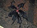 Devil Feast - Flickr - GregTheBusker.jpg