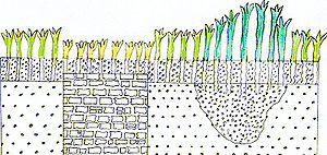 Cropmark - Sketched diagram of a negative cropmark above a wall and a positive cropmark above a ditch