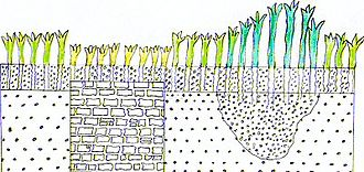 Cropmark - Sketched diagram of a negative cropmark above a wall and a positive cropmark above a ditch