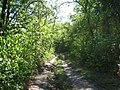 Dirt road in the woods, up the hill - panoramio.jpg