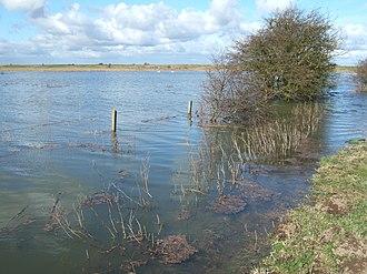 Nene Washes - Image: Distant swans, Guyhirn Wash The Nene Washes geograph.org.uk 1737307