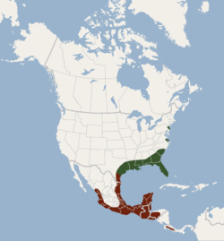Distribution of Lasiurus intermedius.png