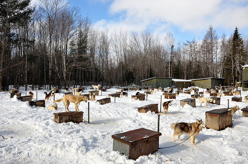 File:Dog sled kennels.JPG