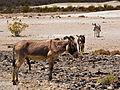 Donkey Show (4619223795).jpg
