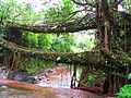 Double decker living root bridge at Meghalaya.jpg