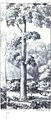 Douglas Hamilton, Alan, Teak tree, A.jpg