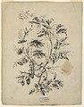 Drawing, Bough of a fantastic tree, 1775–1800 (CH 18350119-2).jpg