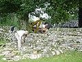 Drystone wall building - geograph.org.uk - 1206463.jpg