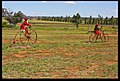 Dubbo Christmas in the field-1and (3155093098).jpg