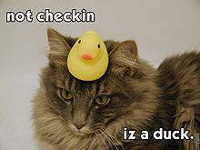 Duck test lolcat.jpg