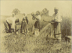 Dudin Harvesting in Poltava region, Ukraine.jpg