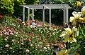 Duftende Schönheit, der Rosengarten im Kurpark Bad Mergentheim. 02.jpg