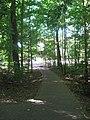 Dunn's Woods pathway northwestward.jpg