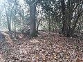 Earthwork enclosures, Oare Common, Berkshire 06.jpg