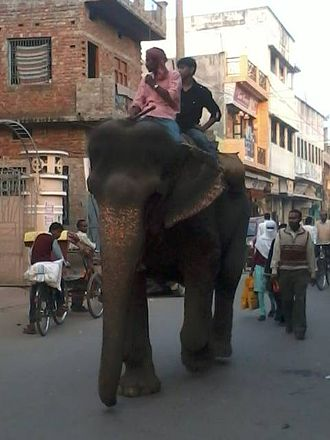 Padrauna - Two men enjoying an Elephant ride in Market Street