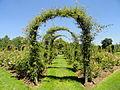 Elizabeth Park, Hartford, CT - rose garden 10 - DSC01450.JPG