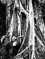 Empera-choco-indianen Selimo, som följde exp. och en mulatt i urskogen. Snarare zambo en mulatt - SMVK - 004056.tif