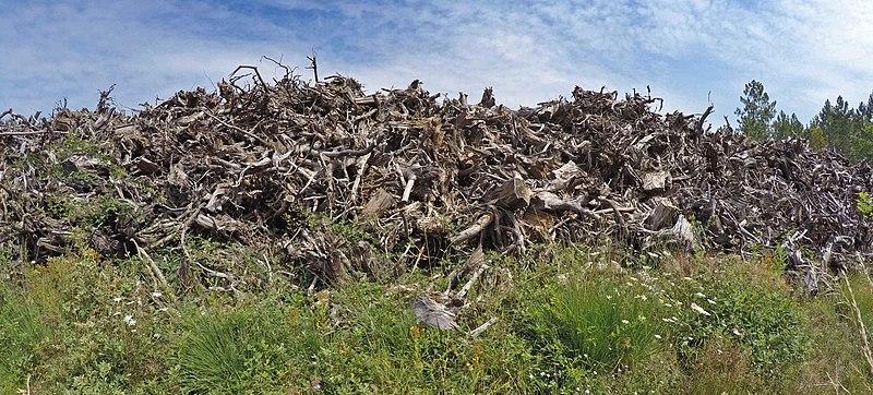 File:Empilement de souches de pins après désouchage d'une coupe rase 2018 Landes de Gascogne 09.jpg