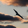 End of the day at the rookery (4168521359).jpg