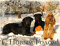 English cocker spaniel jam rottweiler new year.jpg