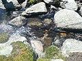 Entre el Prat Fondal i l'estany Mal P1300515.jpg