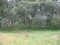 Esker, Cnocan-a-Bealaidh - geograph.org.uk - 525281.jpg