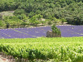 FR-26-La Roche St-Secret Béconne végétation.jpg