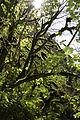 FR64 Gorges de Kakouetta34.JPG