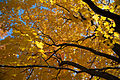 Fall Colors at Enger Park, Duluth, Minnesota (25010489549).jpg